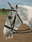 *Currently unavailable* Traditional Hunter Bridle
