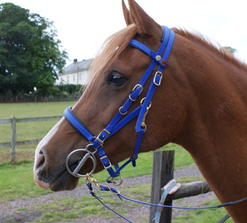 The Classic Halter Bridle