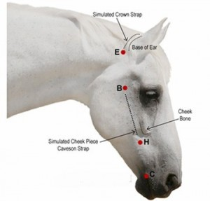 For postal orders please measure your horse for his or her new bridle as very few are a standard size.
