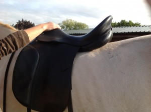 Does the saddle fit the horse's back shape?
