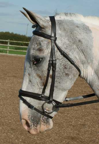 Comfort Raised and Padded Bridle
