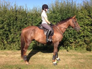 The Comfort Discovery is suitable for all horse and larger pony types, including Ex Racehorses like Stormy  <a class=