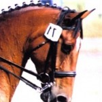Lucinda McAlpine Bridle Single With Reins