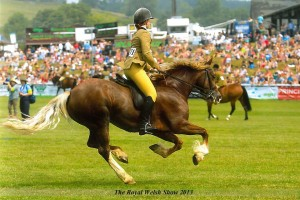 Sarah competing & Rainhill Fair Imogine competing at the Royal Welsh 2013