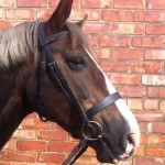 Welsh Section D wearing the Comfort Elite Hunter Bridle