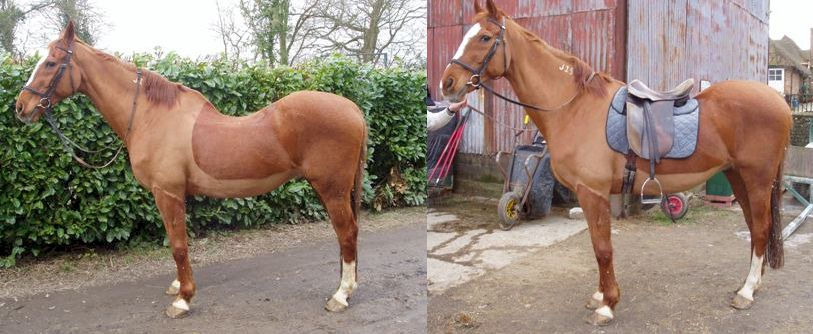 Do you have a Difficult to Fit Horse? Lolly was born this way, but was successfully fitted and ridden in his ReactorPanel saddle fitted by Dean for many years.