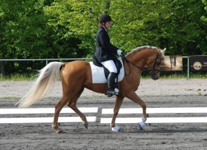 "Signe also uses the same saddle on her other stallion ""Echo""."