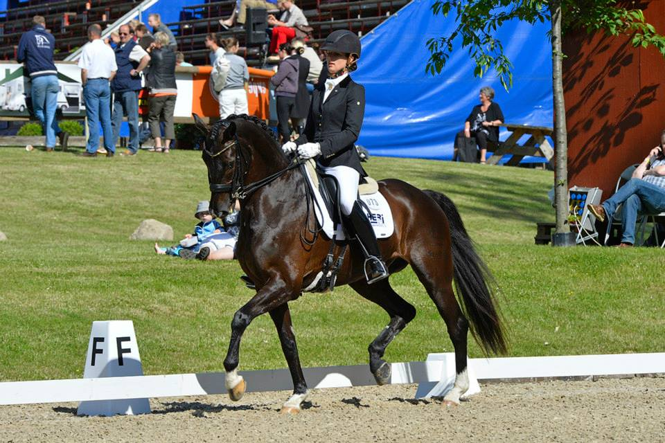 Ditte Frisbjerg and a saddle for a Danish Warmblood