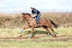 Here is a picture of Jim Allen riding Beach Rhythm in exercise in his race exercise RP. He is a 5 furlong sprinter who has won at Southwell and again last Friday at Wolverhampton. When is he out again? Aiming for the 13th December back at Southwell luck continuing