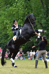 Famous stunt horse Generalissimus Morgana demonstrating at an open day at the Kladruber Stud near Prague, Czech Republic.