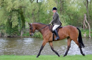 Also available to fit High witheredHacks and Racehorse to Riding Horse <a class=