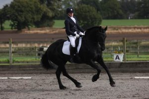 Medusa the Friesian competing in her ReactorPanel Cadence dressage saddle