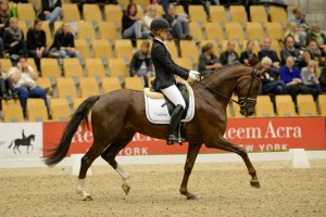 Ditte and Zididada competing at the Danish National Young Horse Championship 2014 in their Cadence, Warmblood fit