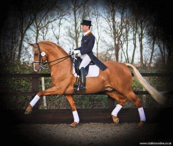Matt Burnett and a saddle for a Grand Prix Dressage Rider